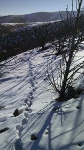 The first set of deer tracks I followed.